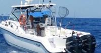 Boston Whaler 305